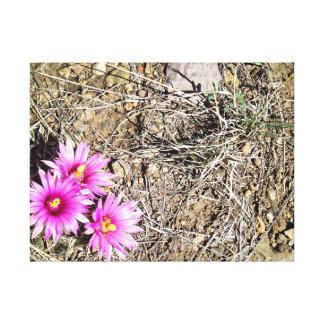 Desert Cactus Daisy Gallery Wrap Canvas