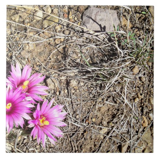 Desert Cactus Daisy Tiles
