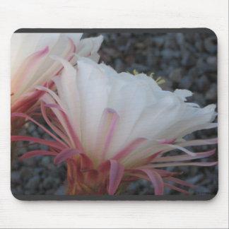 Desert Cactus Flower Mouse Pad