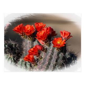 Desert Cactus Flower Postcard