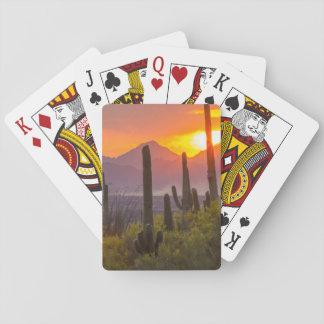 Desert cactus sunset, Arizona Playing Cards