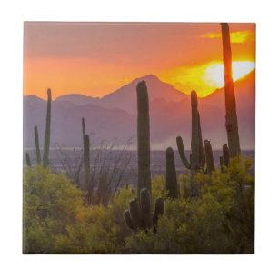 Desert cactus sunset, Arizona Tile