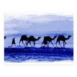 Desert Camel Caravan Blue Postcard