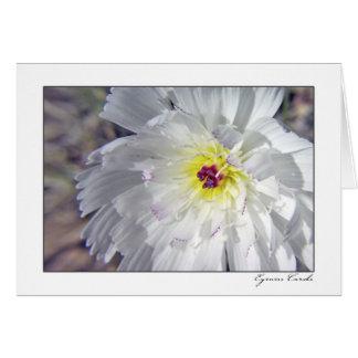 Desert Chicory Greeting Card