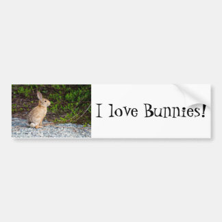 Desert Cottontail Rabbit Bumper Sticker
