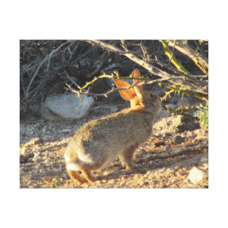 Desert Cottontail Rabbit Gallery Wrapped Canvas