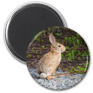 Desert Cottontail Rabbit Magnet