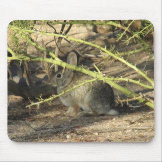 Desert Cottontail Rabbit Mousepad