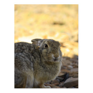 Desert Cottontail Rabbit Post Card