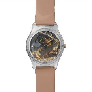 Desert Cottontail Rabbit Wrist Watch