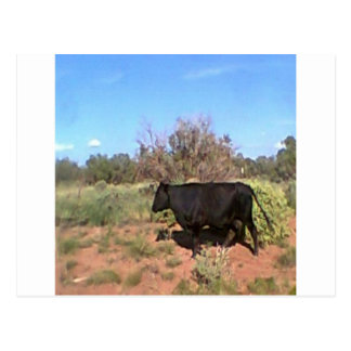Desert  cow post cards