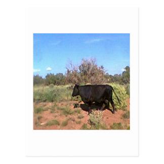 Desert  cow postcard