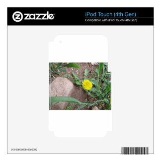Desert Dandelion 3 Decal For iPod Touch 4G
