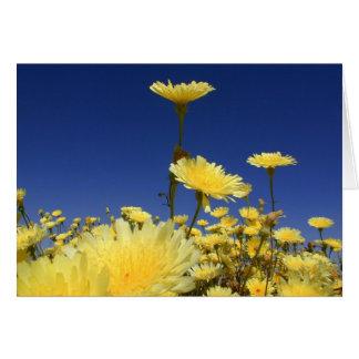 Desert Dandelion Card