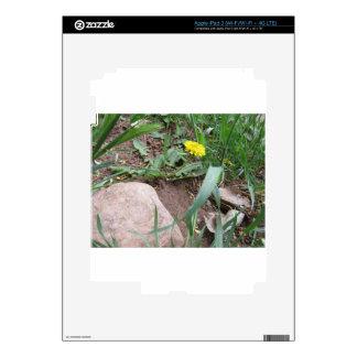 Desert Dandelion Skins For iPad 3
