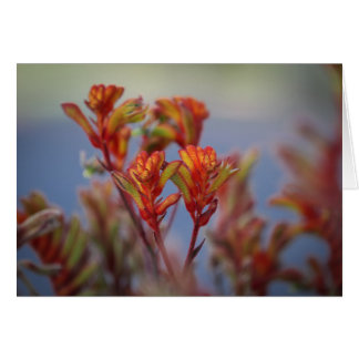 Desert Drought-Tolerant Red Green Christmas Plant Card