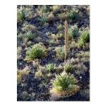 Desert Flora #2 Postcard