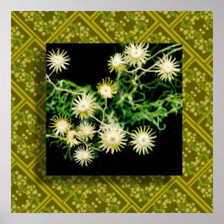desert flora five poster