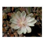 Desert Flower Post Card
