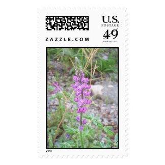 Desert Flower Postage