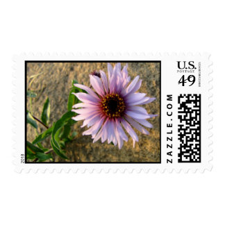 Desert Flower Postage Stamps