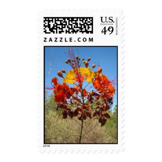 Desert Flower Stamp
