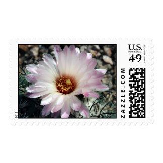 Desert Flower, S Cyr Postage Stamps