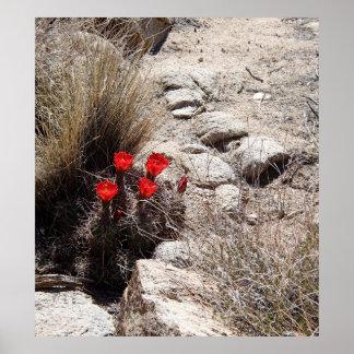 Desert Flowers, Joshua Tree National Park Poster