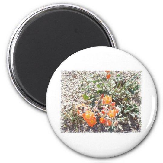 Desert Globemallow 2 Inch Round Magnet