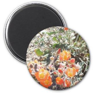 Desert Globemallow Fridge Magnet