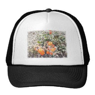 Desert Globemallow Mesh Hat