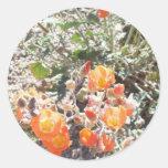 Desert Globemallow Sticker