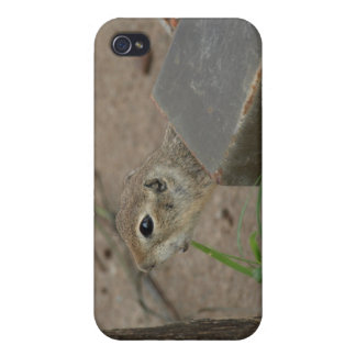 Desert Ground Squirrel Animal Motivational Covers For iPhone 4