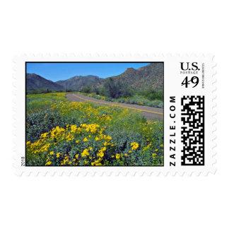 Desert Highway flowers Postage Stamps