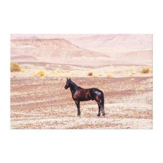 Desert Horse P8664 Canvas Print