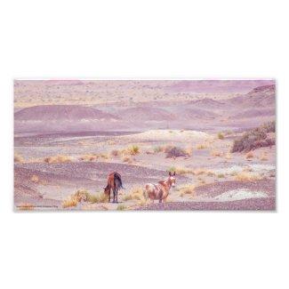 Desert Horses P8639 Photo Print