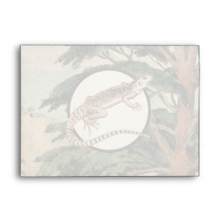 Desert Iguana In Natural Habitat Illustration Envelopes