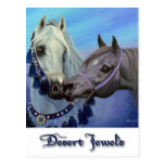Desert Jewels Arabian horses postcard