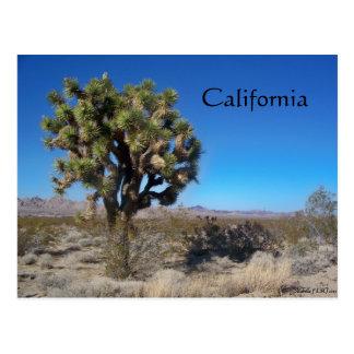 Desert Joshua Tree Postcard