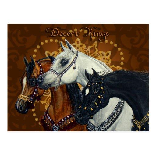 Desert Kings Arabian horses postcard