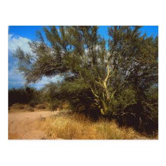 Desert Life postcard