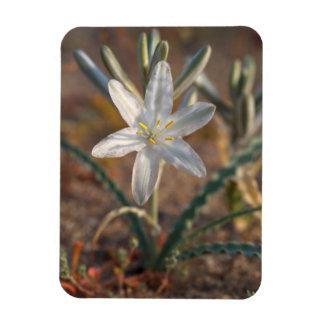 Desert Lily Wildflowers Magnet