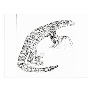 Desert Or Monitor Lizard Postcard