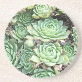 Desert plant coaster
