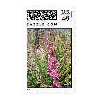 Desert Plants Stamps