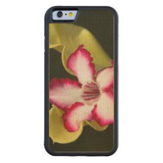 Desert-Rose (Adenium Obesum), South Africa Carved Maple iPhone 6 Bumper Case