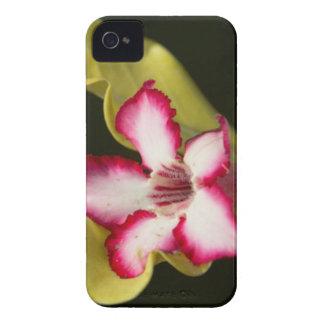 Desert-Rose (Adenium Obesum), South Africa iPhone 4 Covers
