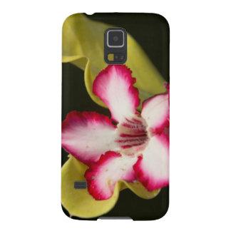 Desert-Rose (Adenium Obesum), South Africa Galaxy S5 Cover