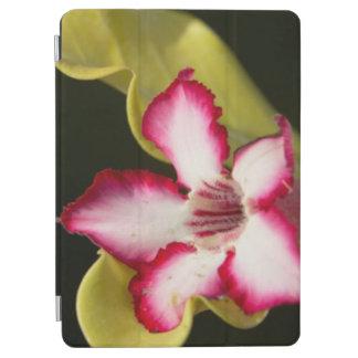 Desert-Rose (Adenium Obesum), South Africa iPad Air Cover