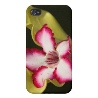 Desert-Rose (Adenium Obesum), South Africa iPhone 4/4S Cover
